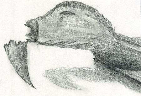 Broken Beak